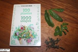 Le super livre de Mamie Huguette <3 + feuilles de Calendula fraîche, menthe fraîche et mélisse séchées