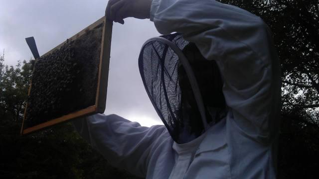 fdv abeilles