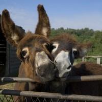 Les ânes d'autan : Soins pour les bébés les enfants et les mamans !
